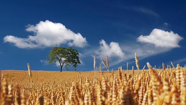 Rohstoff ETF ohne Agrarrohstoffe